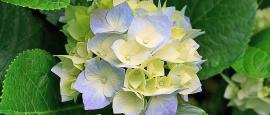 Bei uns finden Sie vielseitige und kreative Floristik.